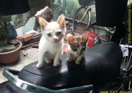 Sự tích Dầu Tràm Thiên An cứu sống những chú mèo